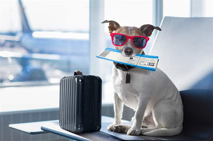 ESA travel dog