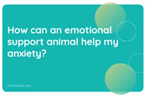 1 How can an emotional support animal help my anxiety?
