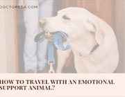 How to travel with an emotional support animal?