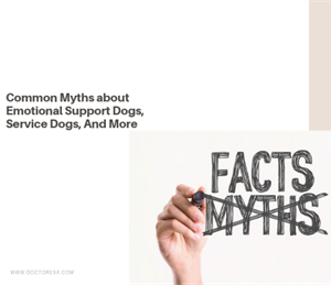 1 Common Myths about Emotional Support Dogs, Service Dogs, And More