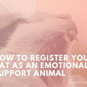 How to Register Your Cat as an Emotional Support Animal
