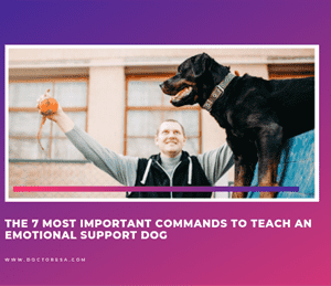 1 The 7 Most Important Commands to Teach an Emotional Support Dog
