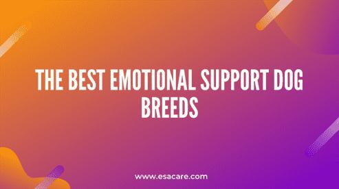 The Best Emotional Support Dog Breeds