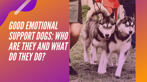 Good Emotional Support Dogs: Who are They and What Do They Do?