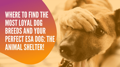 Where to Find the Most Loyal Dog Breeds and Your Perfect ESA Dog: The Animal Shelter!
