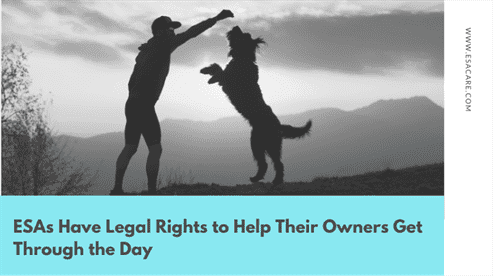 ESAs Have Legal Rights to Help Their Owners Get Through the Day