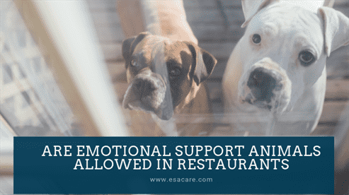 Are Emotional Support Animals Allowed in Restaurants
