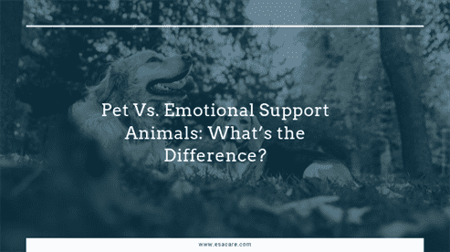 Pet Vs. Emotional Support Animals: What's the Difference?