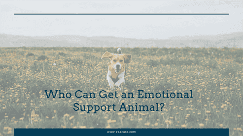 Who Can Get an Emotional Support Animal?