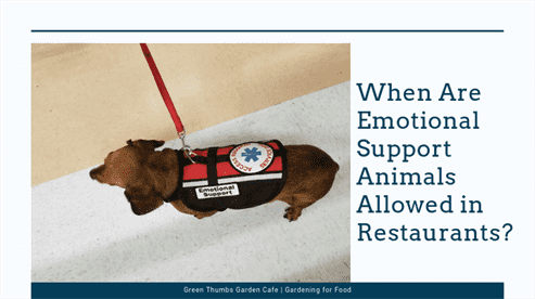 When Are Emotional Support Animals Allowed in Restaurants?