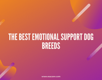 1 The Best Emotional Support Dog Breeds