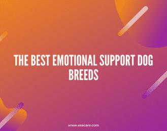 1 The Best Emotional Support Dog Breeds
