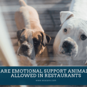 1 Are Emotional Support Animals Allowed in Restaurants