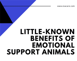 1 Little-Known Benefits of Emotional Support Animals