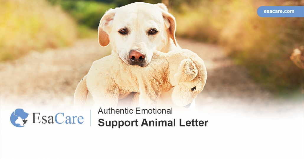 Authentic Emotional Support Animal Letter