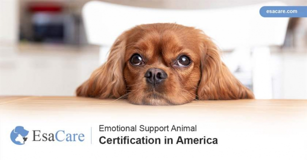 Emotional Support Animal Certification In America