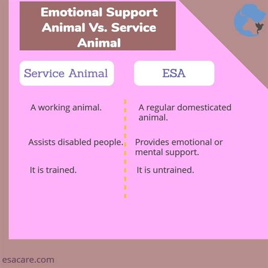 Emotional Support Animal Vs. Service Animal