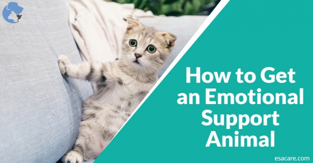 Getting an Emotional Support Animal
