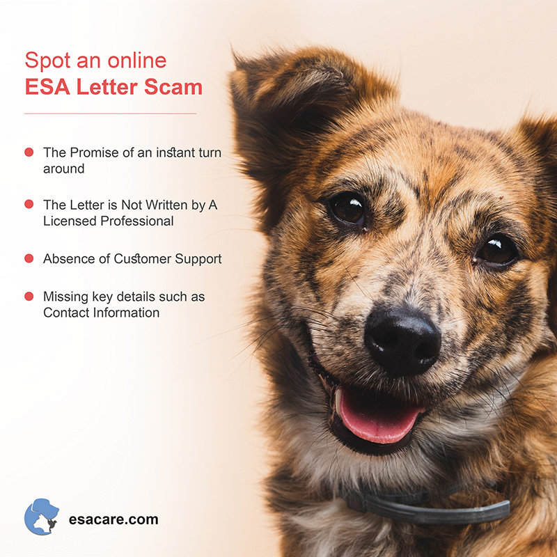ESA Letter Scams
