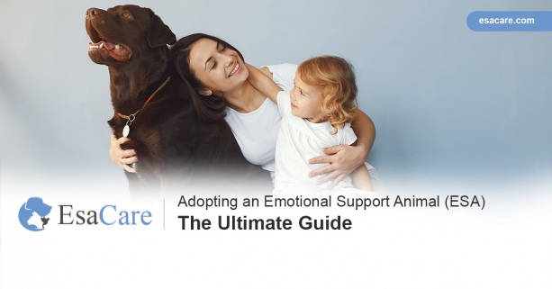 Get an emotional support animal