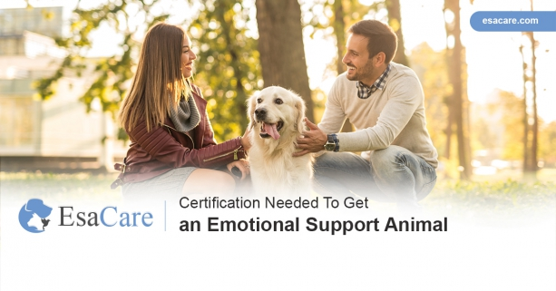 Certification Needed To Get An Emotional Support Animal