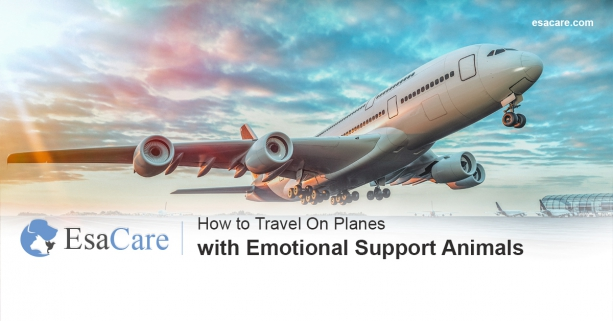 Emotional support animals on planes