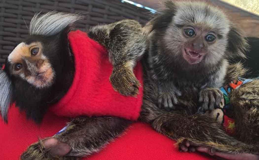 Diddy Kong and Yeti Kong