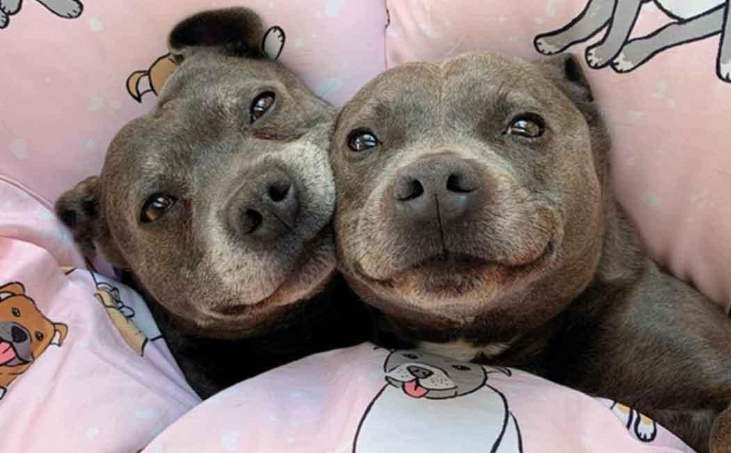 Darren and Phillip ESA Dogs