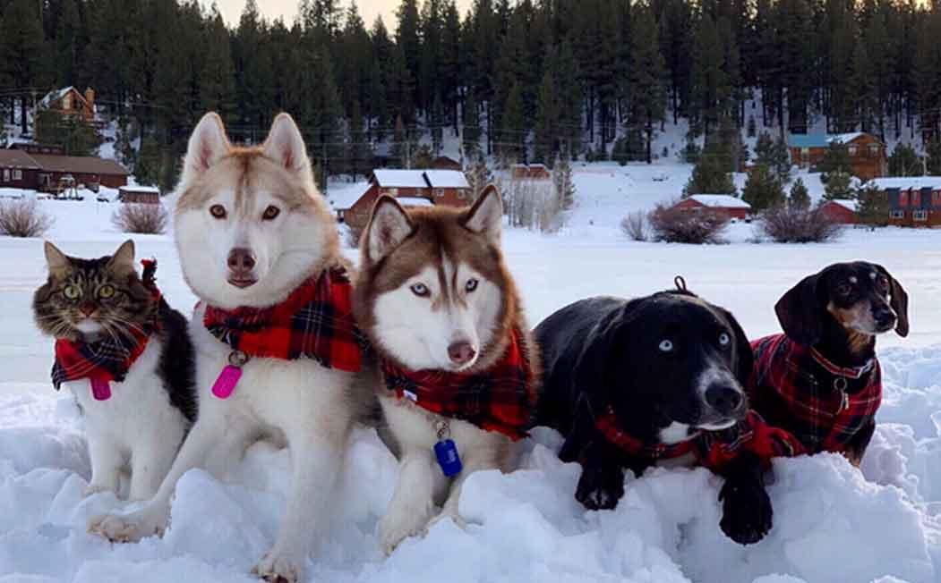 Lilo and Husky ESA Dogs