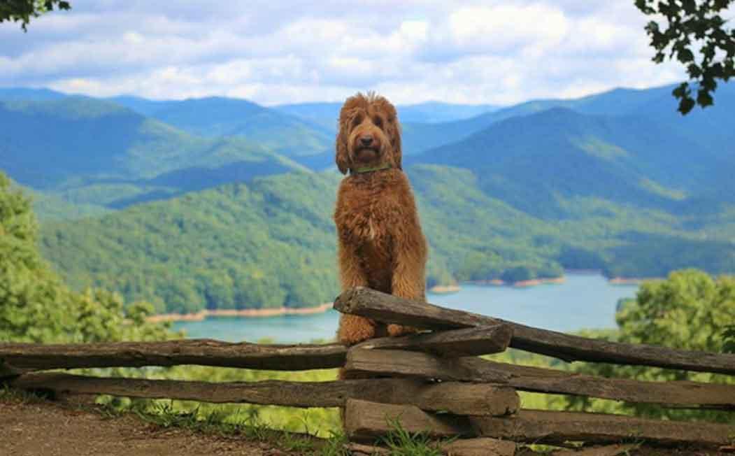 Oliver ESA Dog