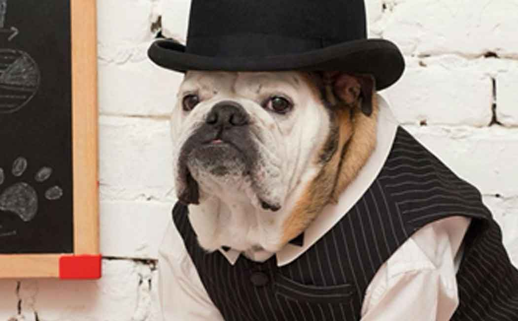 Bulldog ESA