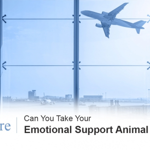 Emotional support animals planes