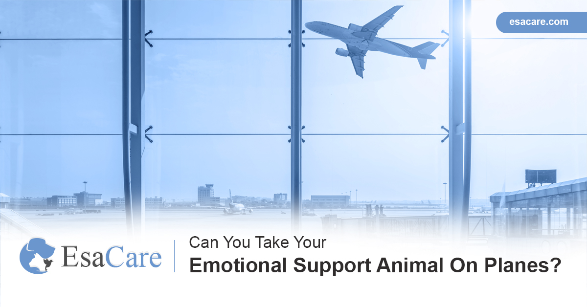 Emotional support animals planes