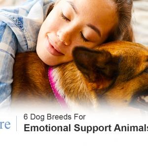 ESA dog breeds