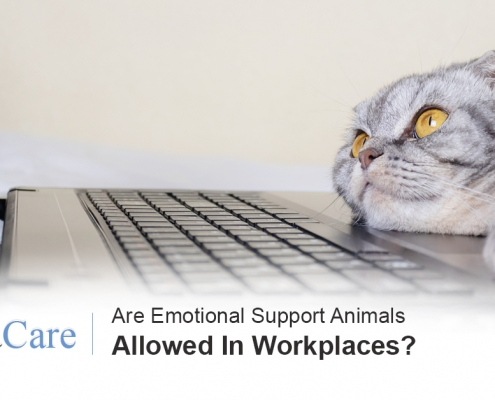 Emotional support animals laws workplaces