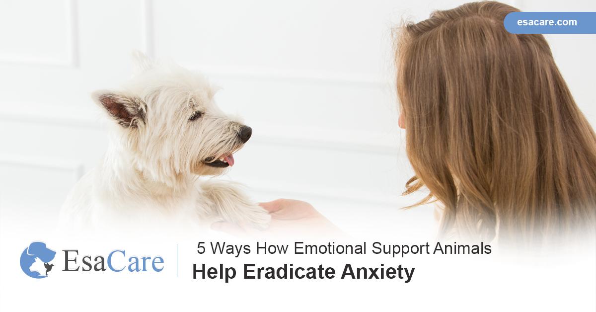 ESA Care Anxiety