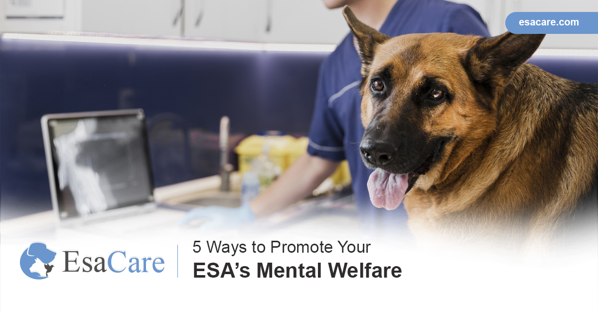 Mental Welfare
