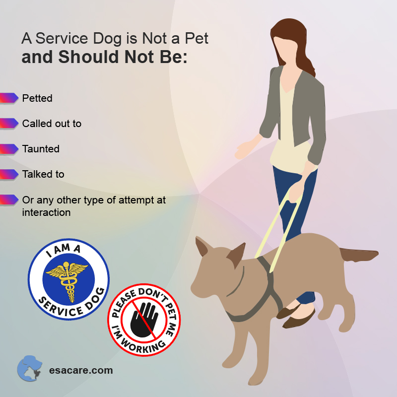 Service Dogs and Pets