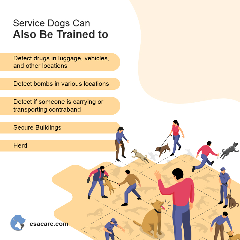 Service Dogs Training