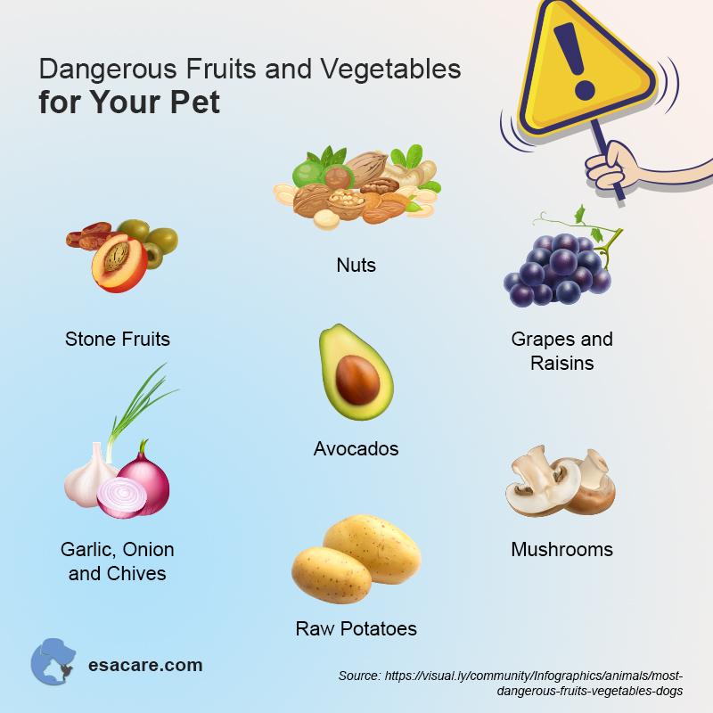 Harmful Pet Food