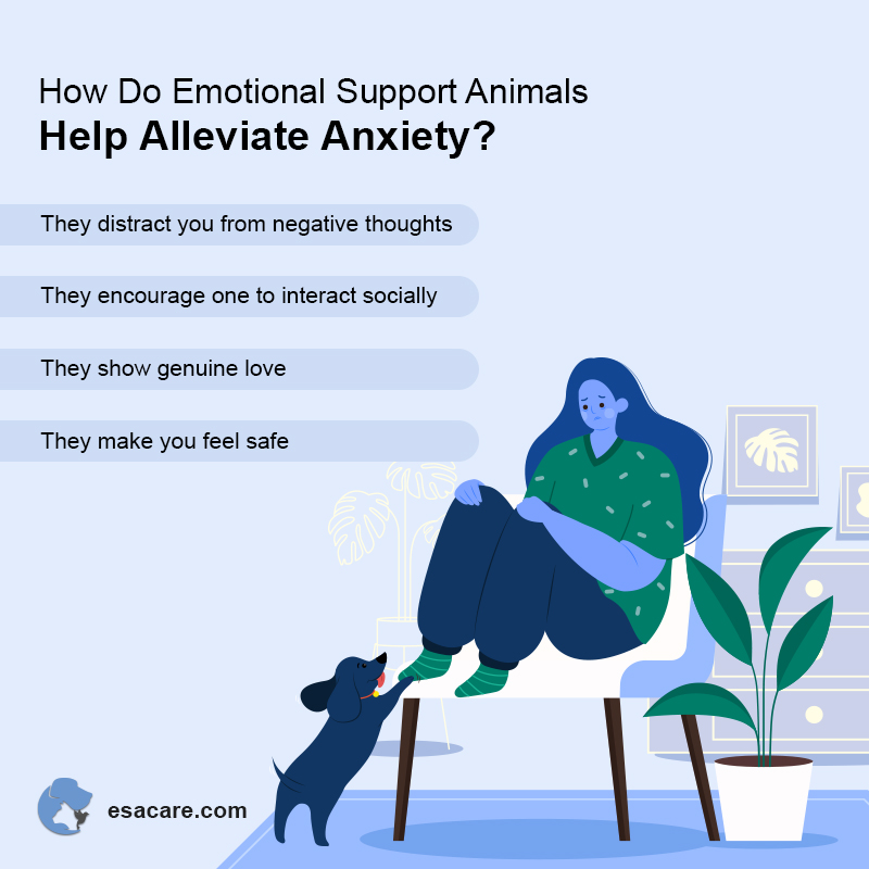 ESA Pet and Anxiety