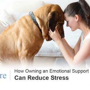 ESA Pet and Stress