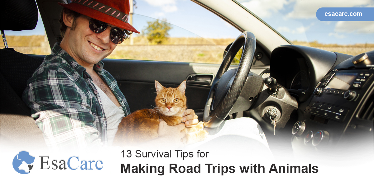 Road trips with pets