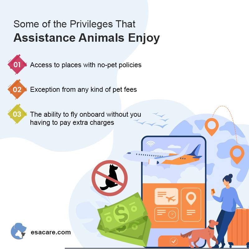 Assistance Animals