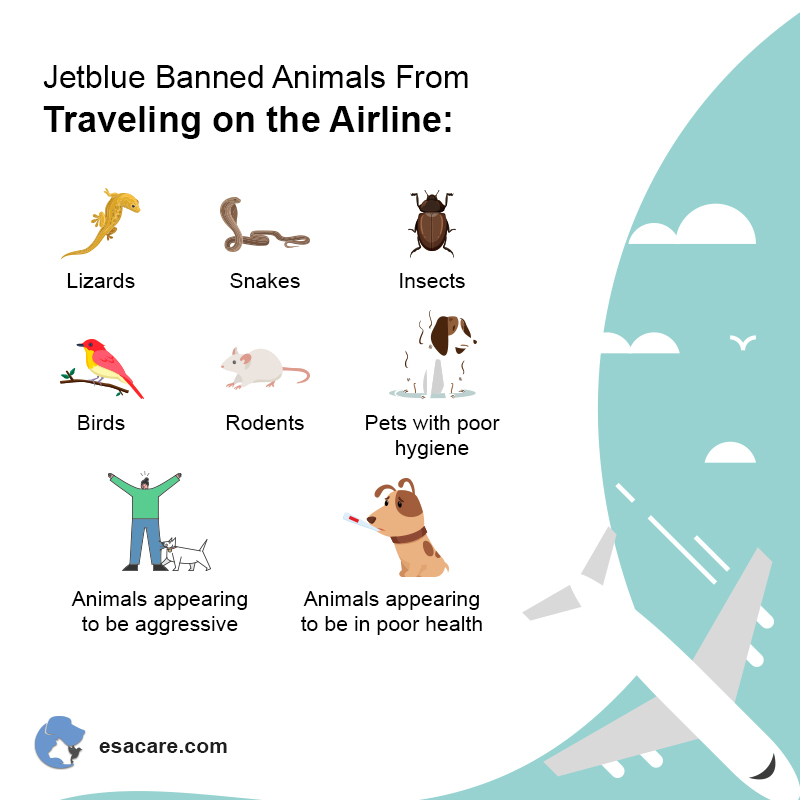 Banned Animals