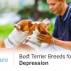 Terrier Breeds
