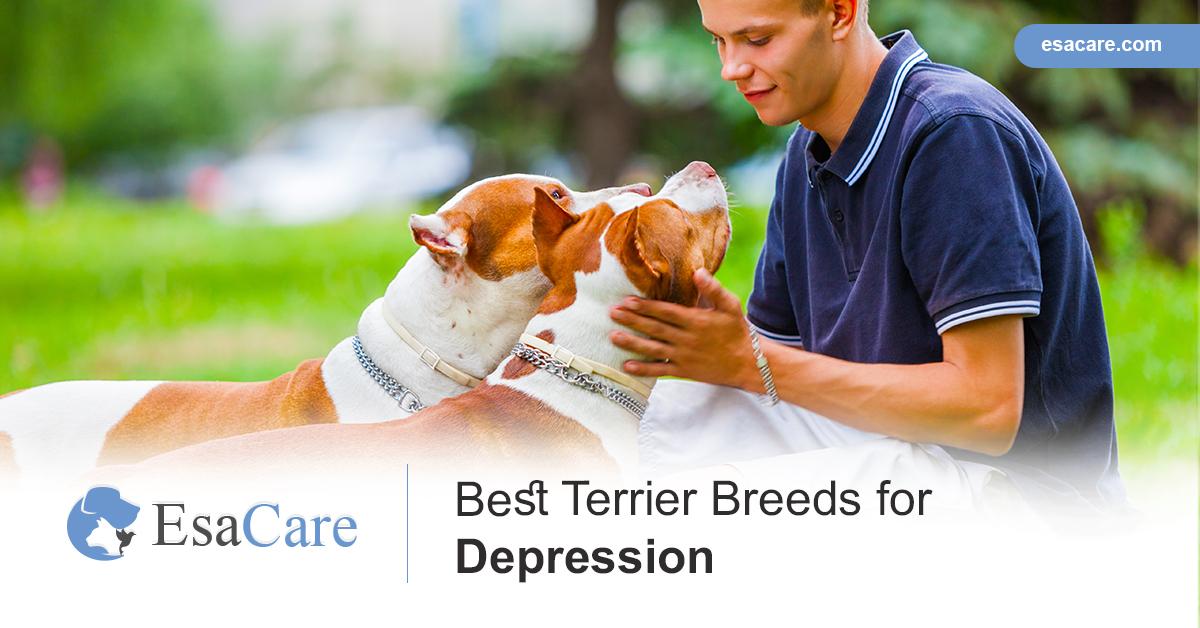 Terrier Breeds