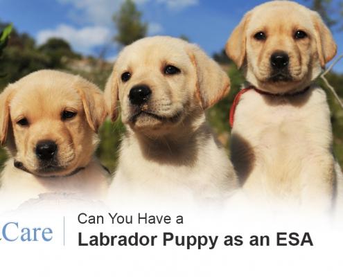 Labrador as an ESA