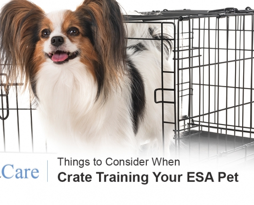 Crate Training ESA