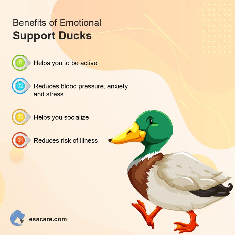 ESA Ducks
